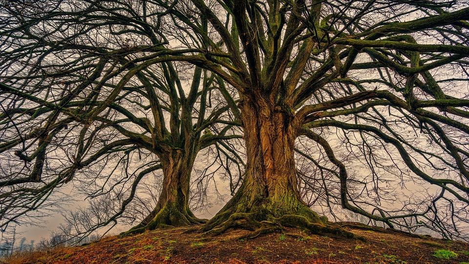 Why Genealogies Matter