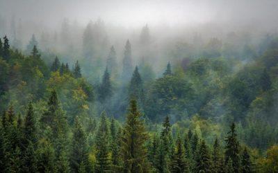 Beauty in the Fog